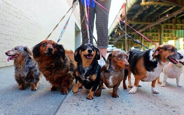 Студенты из Тюмени создали сервис по выгулу собак